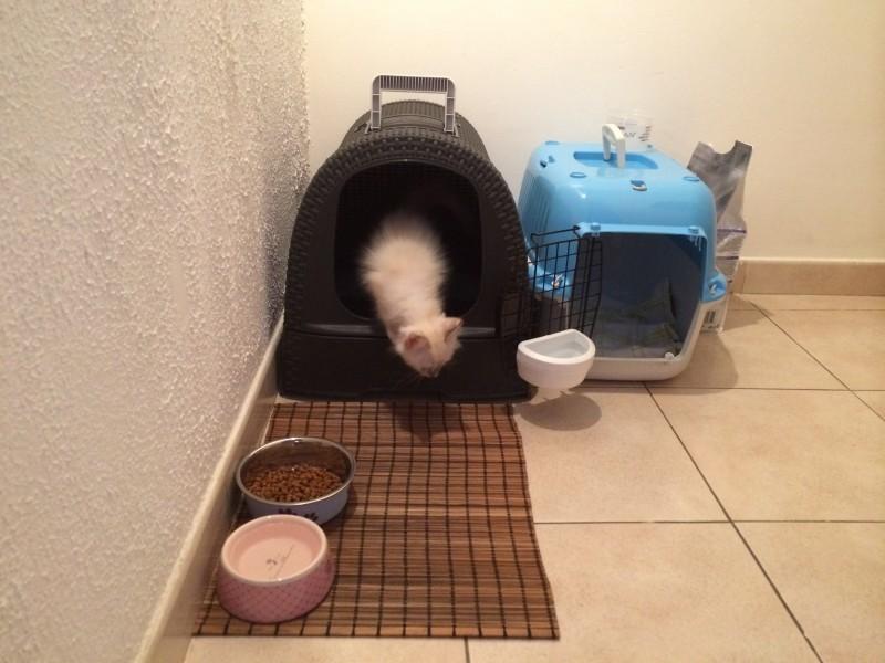 avis sur maison de toilette pour chat anthracite aspect rotin nettoyage facile. Black Bedroom Furniture Sets. Home Design Ideas