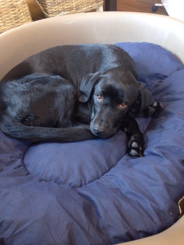 panier plastique aspect rotin pour chiens et chats nettoyage facile couleur moka panier et. Black Bedroom Furniture Sets. Home Design Ideas