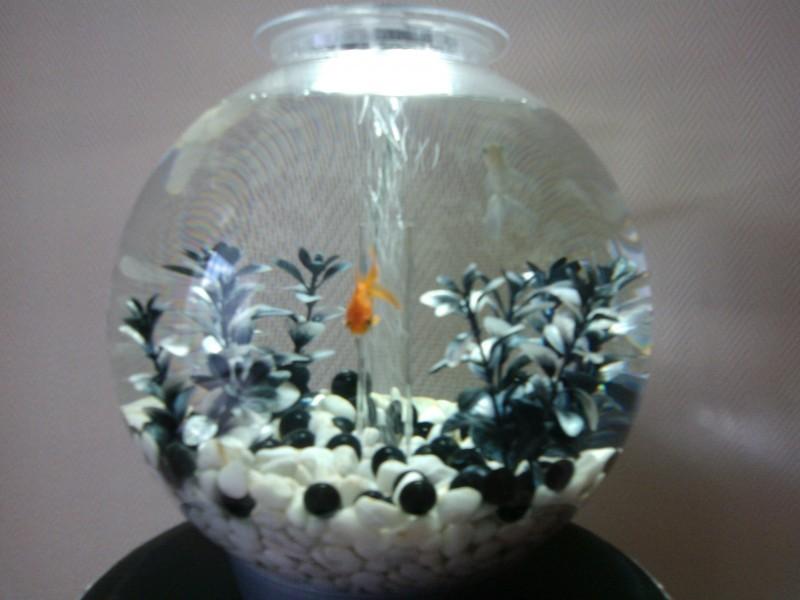 cailloux aquarium