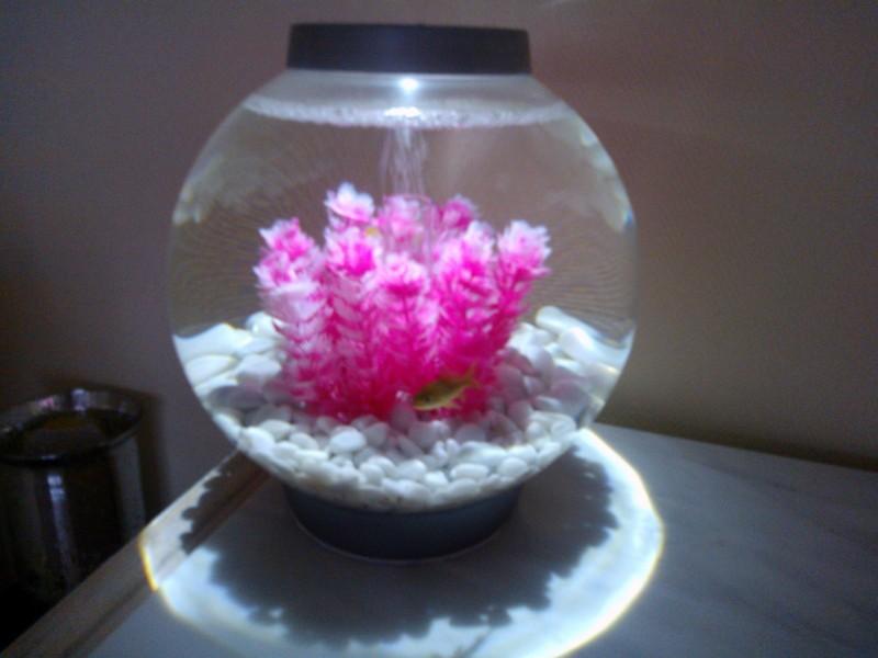 Plante ventouse vulpin pour aquarium quip marina pour for Petit aquarium original