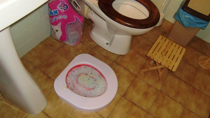 litter kwitter kit liti re pour entra ner votre chat se servir de vos toilettes. Black Bedroom Furniture Sets. Home Design Ideas
