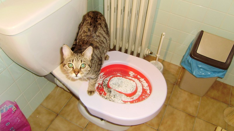 litiere chat toilettes