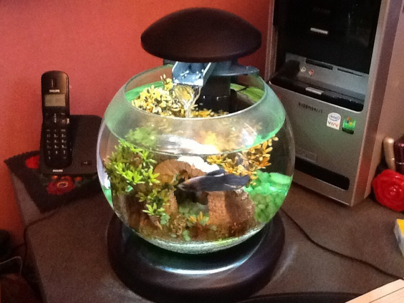 how to make tank water betterbfor tetras