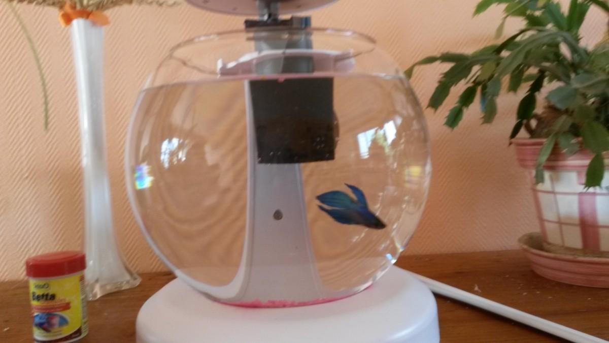 Aquarium boule cascade for Bulleur pour aquarium boule