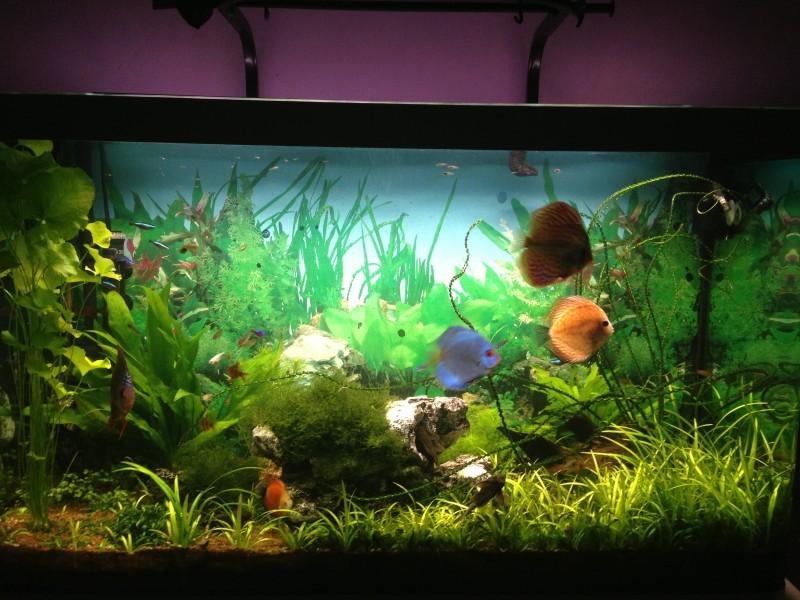 lampe led pour aquarium eau douce design de maison design de maison. Black Bedroom Furniture Sets. Home Design Ideas