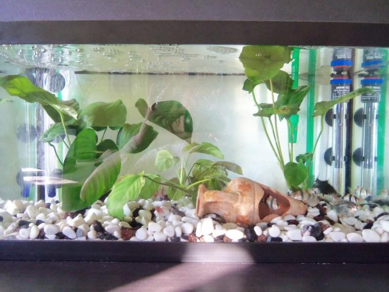 Thermo control eheim chauffage aquarium haut de gamme for Prix aquarium