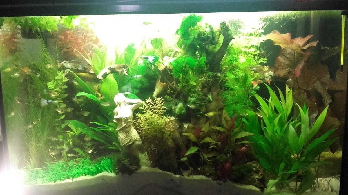 décor aquarium artificiel