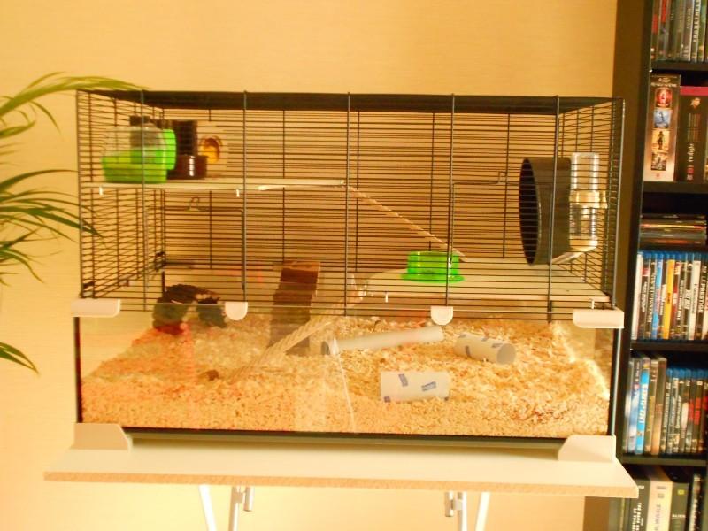 Cage Karat En Verre Pour Petits Rongeurs Cage Hamster