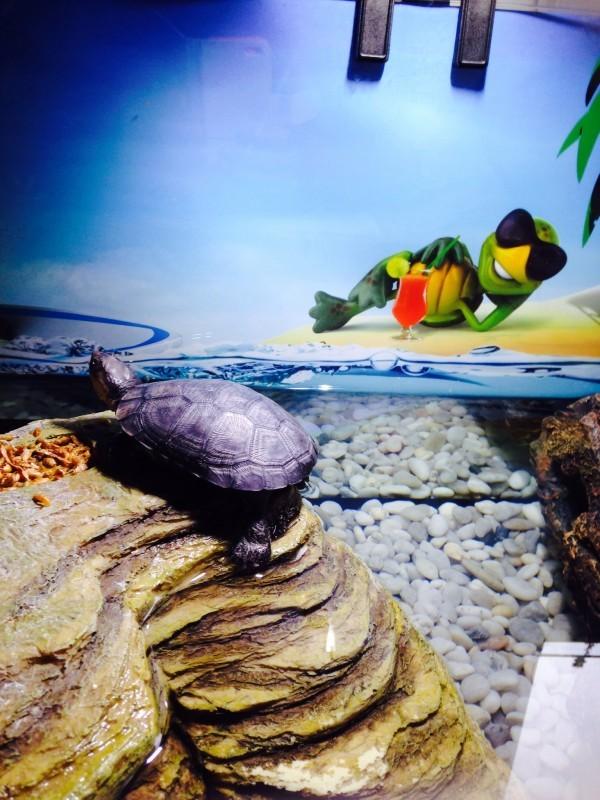 conditionneur d 39 eau pour terrarium biotopol t 50 ml traitement de l 39 eau. Black Bedroom Furniture Sets. Home Design Ideas