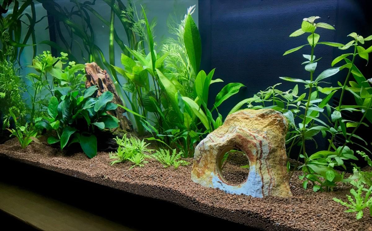 Avis sur jbl manado substrat naturel pour aquarium for Substrat pour aquarium