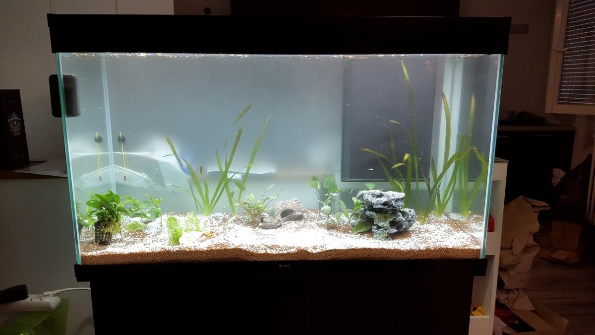 aquarium eau douce haut de gamme