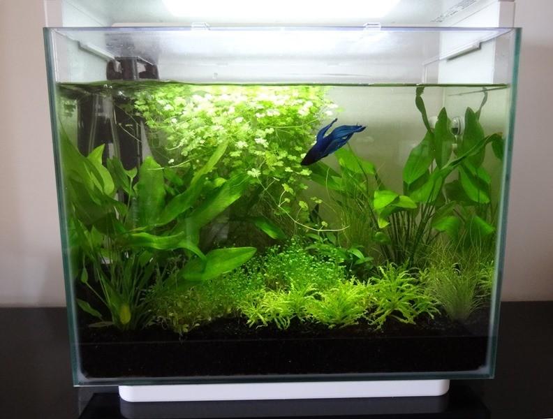 Aquarium design home 40 noir superfish home review co for Ou trouver des galets blancs