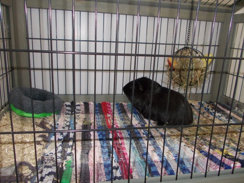 cage inland lapin toy cochon d 39 inde furet 80cm cage. Black Bedroom Furniture Sets. Home Design Ideas