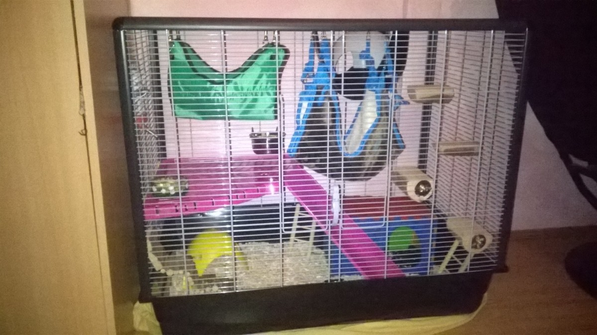 Cage zeno 2 et 3 knock down pour rat et furet cage rat - Acheter un furet ...