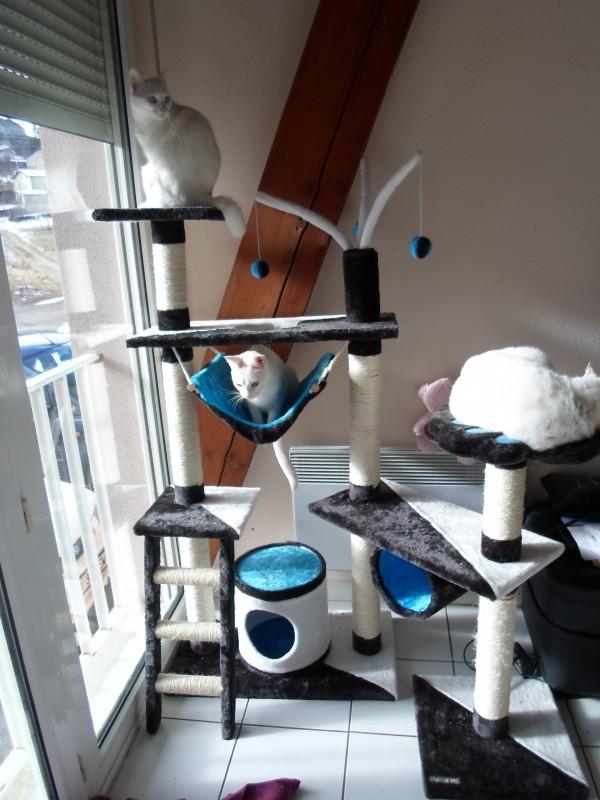 arbre a chat tivcrea gris bleu et blanc arbre chat. Black Bedroom Furniture Sets. Home Design Ideas