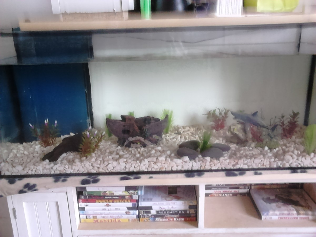 déco requin aquarium