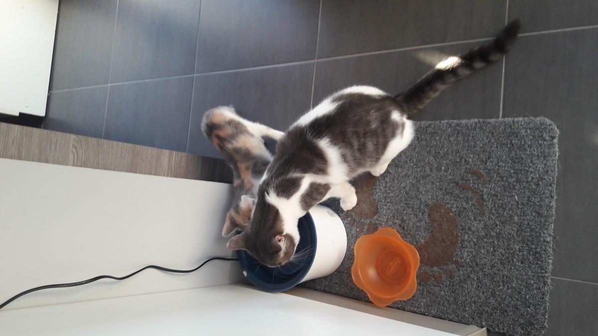 fontaine eau fresh clear pour chat et petit chien fontaine eau et distributeur d 39 eau. Black Bedroom Furniture Sets. Home Design Ideas