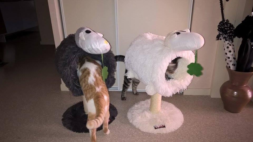 arbre a chat yeti blanc