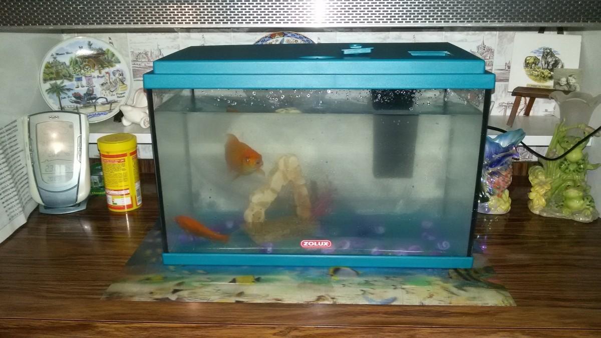Avis sur filtre interne i25 marina for Filtre pour aquarium boule