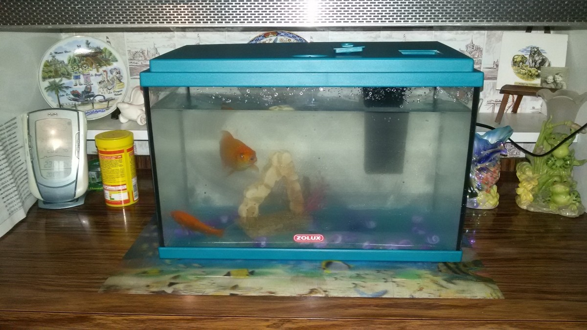 Avis sur filtre interne i25 marina for Filtre petit aquarium