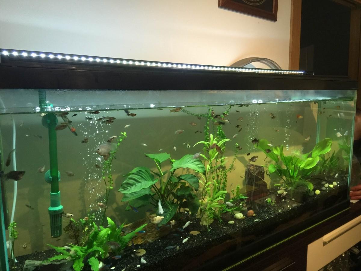 avis sur tetra co2 plus carbone liquide pour plante d 39 aquarium. Black Bedroom Furniture Sets. Home Design Ideas