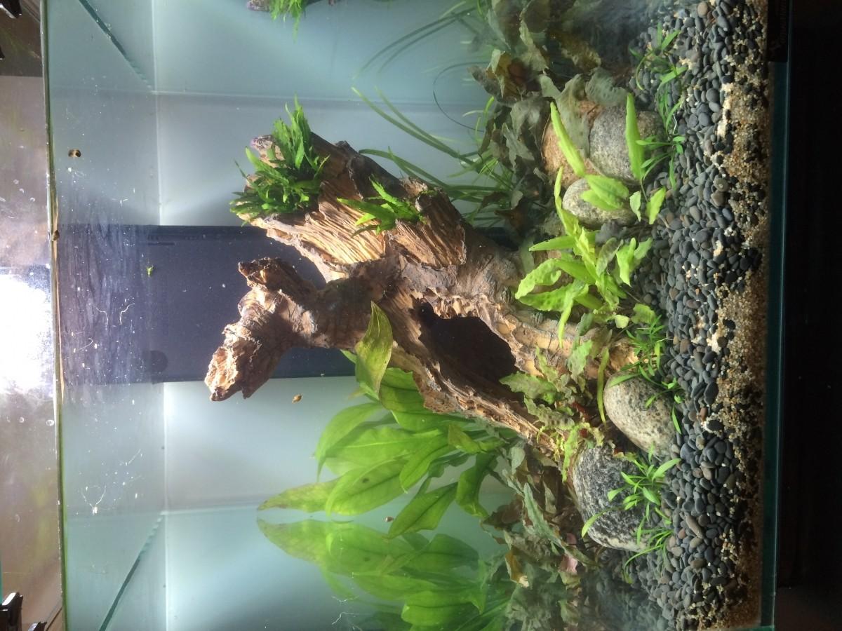 Deco galet aquarium for Racine aquarium