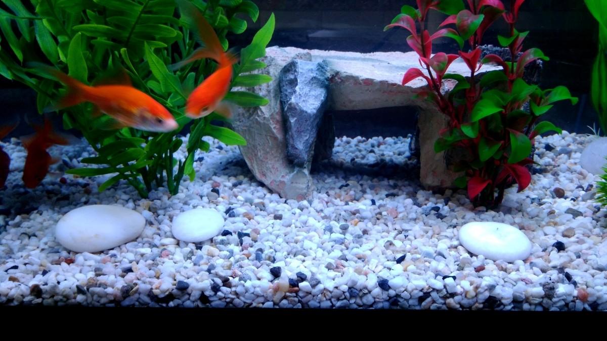 Quartz clair pour aquarium 10kg sable et gravier aquarium for Gravier pour aquarium