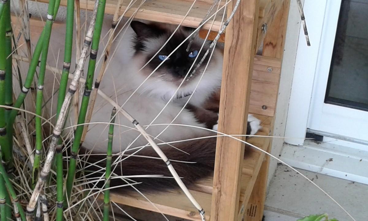 cl ture anti fugue pour chat petsafe comportement et. Black Bedroom Furniture Sets. Home Design Ideas