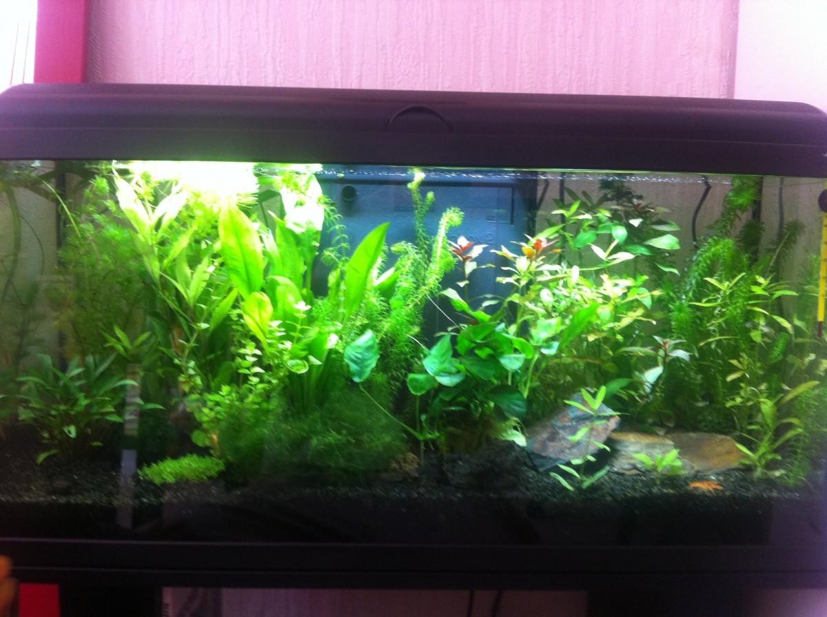 Aquadream 80 noir 90 litres avec clairage led aquarium for Aquarium 80 litres
