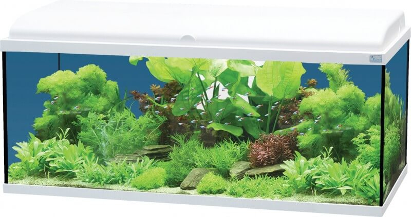 aquadream 80 blanc 90 litres avec clairage led aquarium. Black Bedroom Furniture Sets. Home Design Ideas