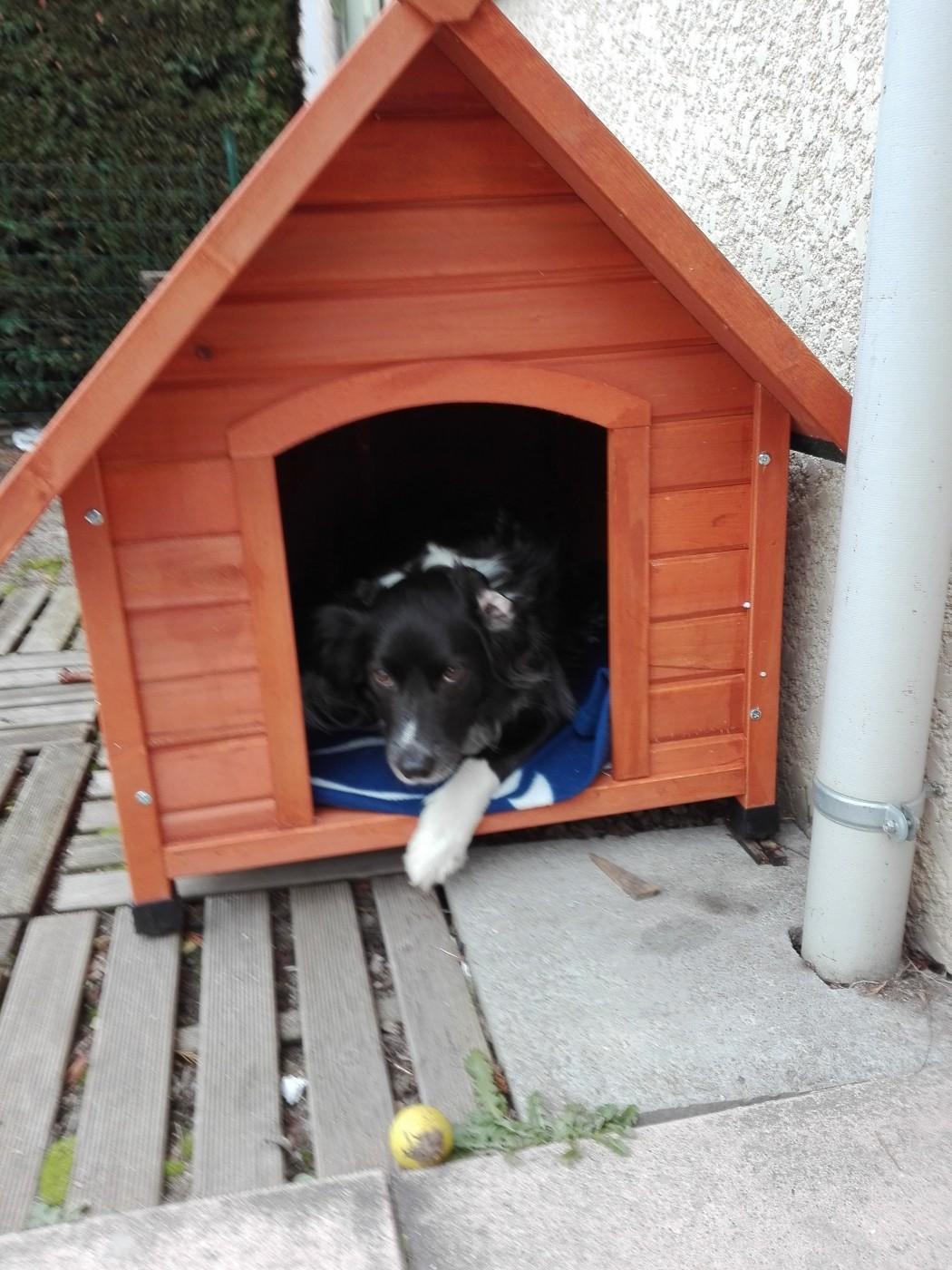 niche pour chien en bois toit pentu akira niche. Black Bedroom Furniture Sets. Home Design Ideas