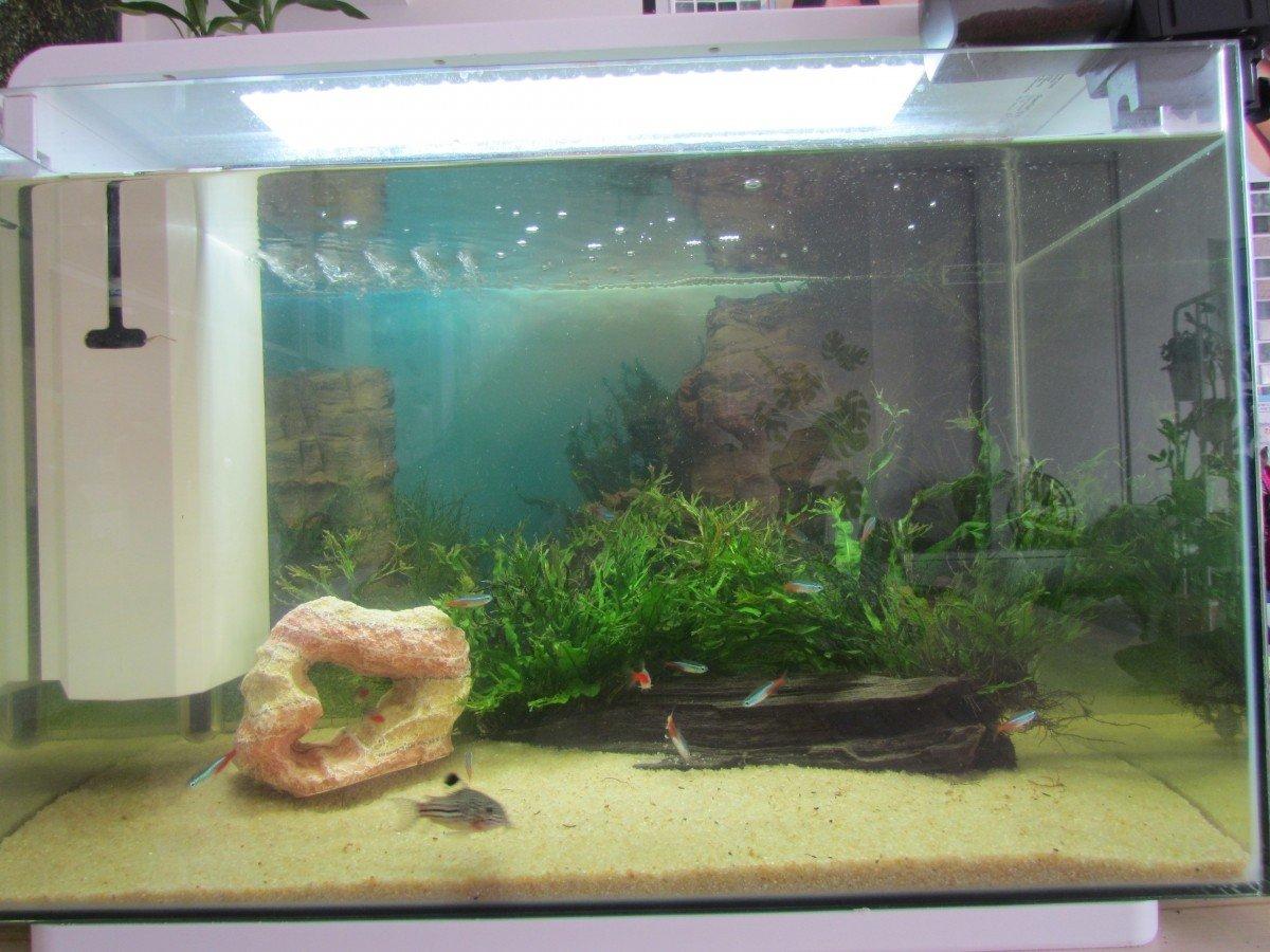 aquarium blanc noir home 60 aquarium et meuble. Black Bedroom Furniture Sets. Home Design Ideas