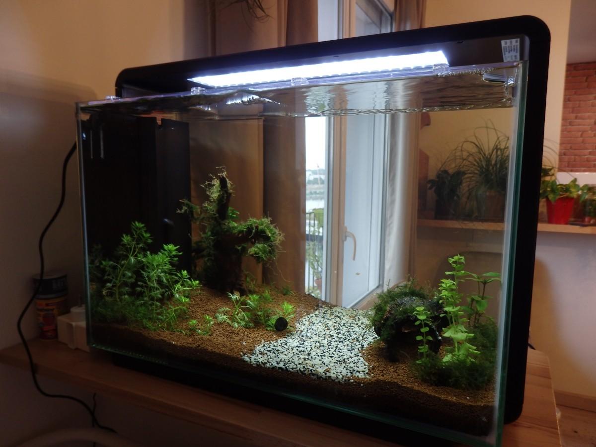 Aquarium blanc noir home 60 aquarium et meuble for Gimnasio 60 y 15