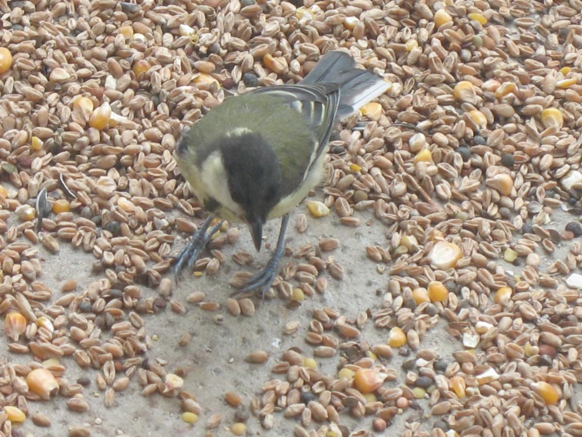 M lange essentiel pour oiseaux du ciel nourriture oiseaux - Graines pour oiseaux du ciel ...