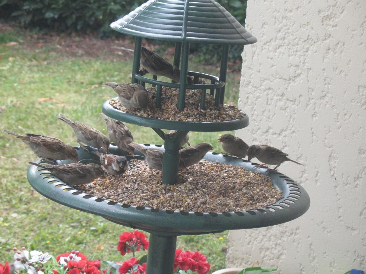 Avis sur m lange essentiel pour oiseaux du ciel - Graines pour oiseaux du ciel ...