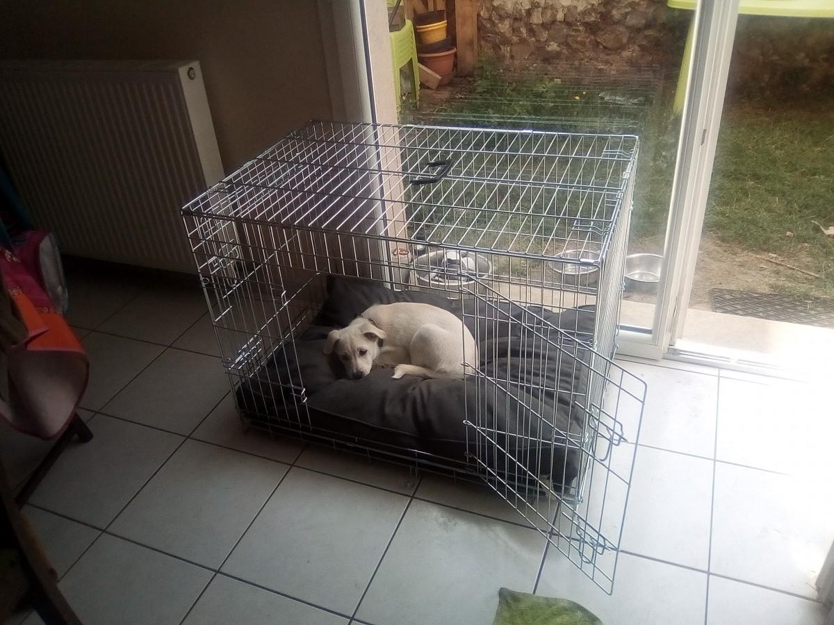 cage de transport pour chien zolia koda avec fond plastique noir cage de transport. Black Bedroom Furniture Sets. Home Design Ideas