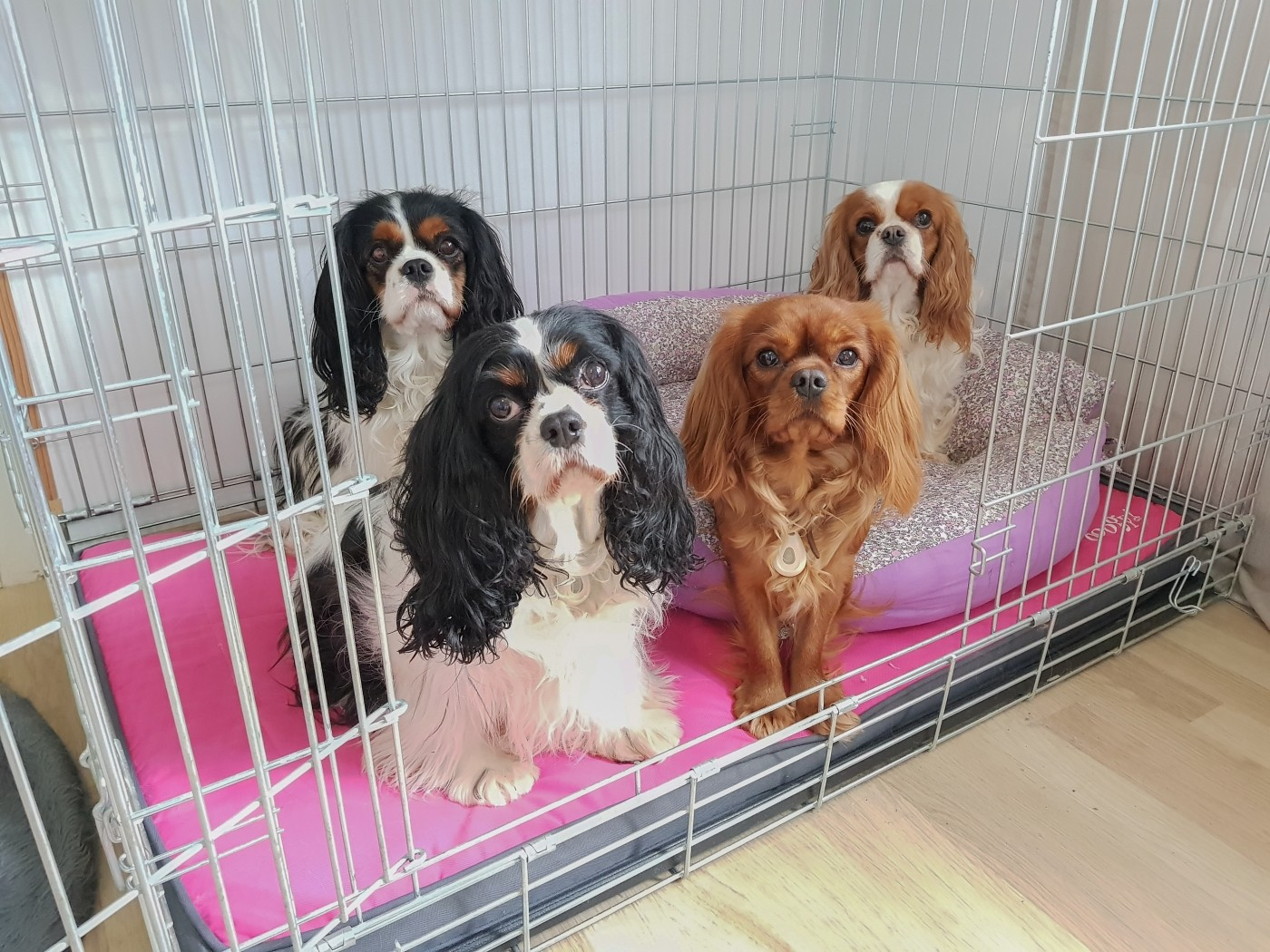 Avis sur Cage de transport pour chien ZOLIA KODA avec fond