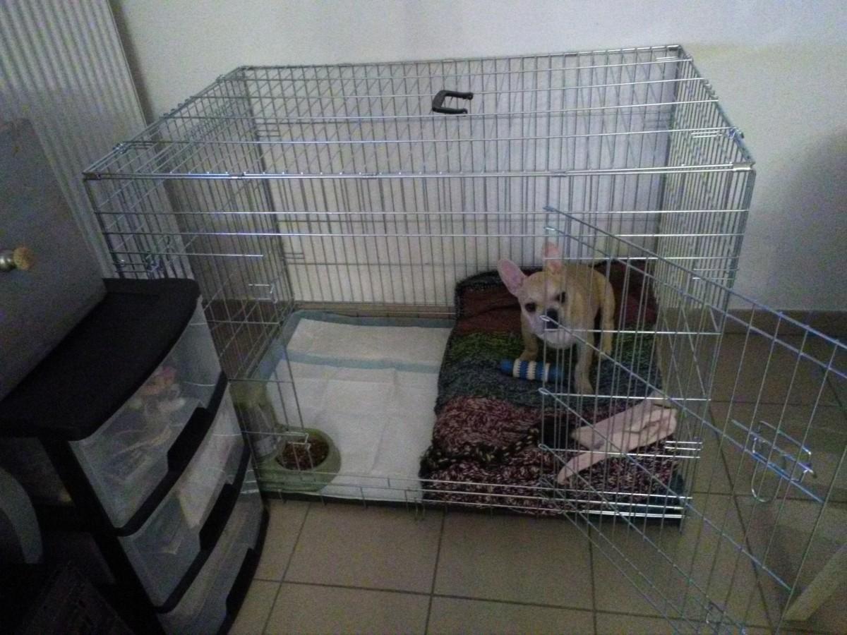 avis sur cage de transport pour chien zolia koda avec fond plastique noir. Black Bedroom Furniture Sets. Home Design Ideas