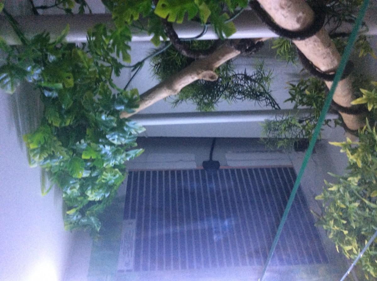 Tapis chauffant reptilus pour terrarium et vivarium tapis chauffant - Tapis chauffant terrarium ...