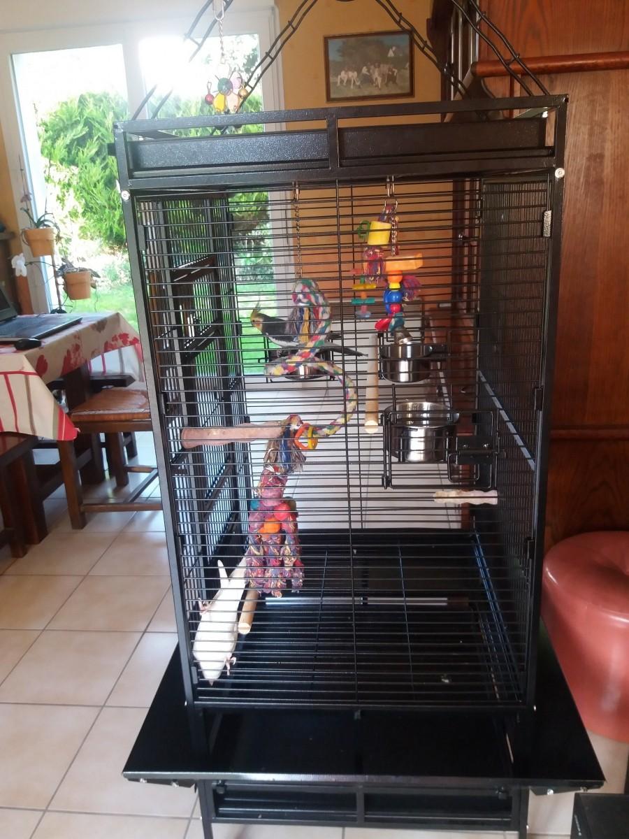 cage zolia youyou pour perroquet moyen et grande perruche. Black Bedroom Furniture Sets. Home Design Ideas