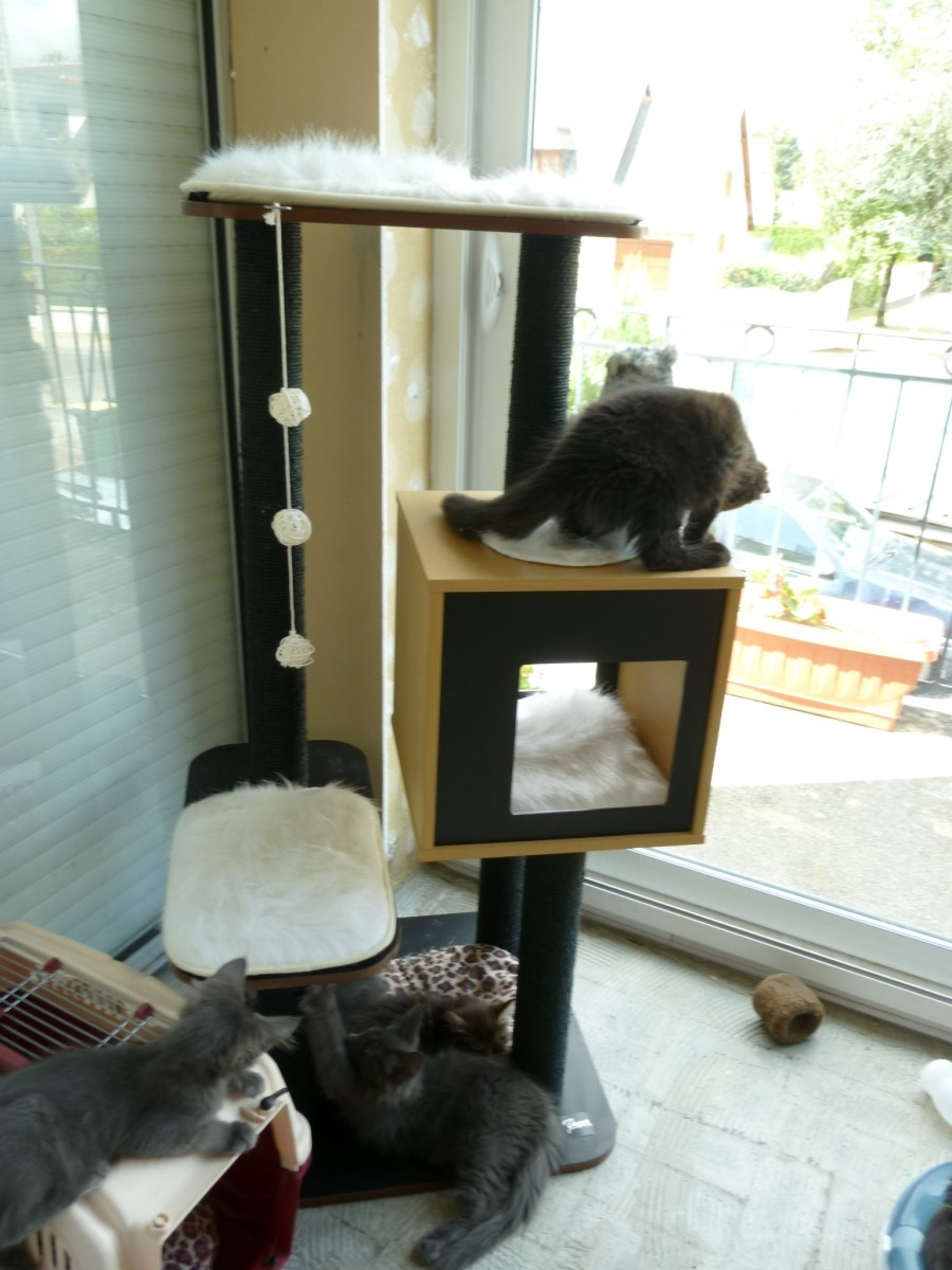 arbre chat v base haute noyer 120cm arbre chat. Black Bedroom Furniture Sets. Home Design Ideas