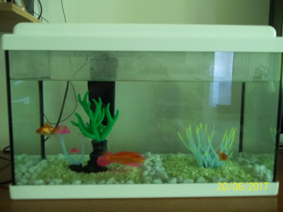 Avis sur aquarium nanolife kidz blanc for Aquarium zolux