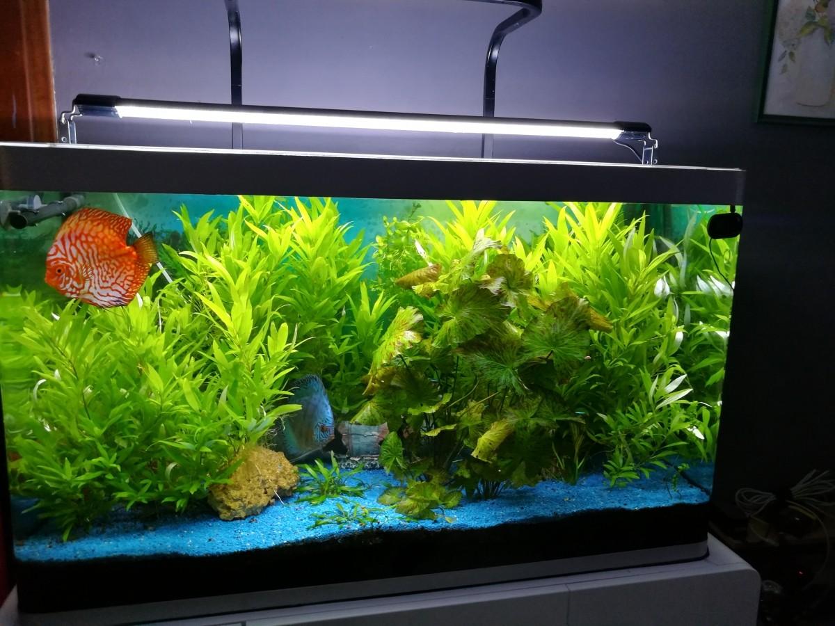 Rampe d 39 clairage easyled pour eau douce eclairage led for Aquarium ouvert