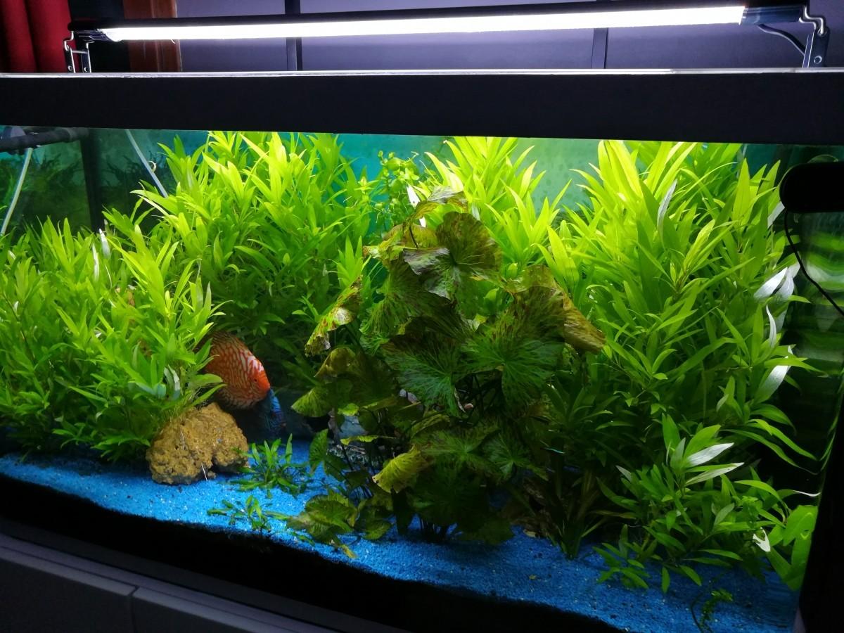 Rampe d 39 clairage easyled pour eau douce eclairage led for Aquarium a acheter