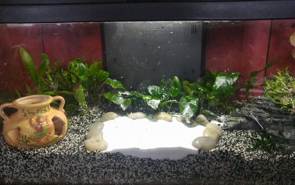 Sable aquasand tendance blanc iceberg sable et gravier for Sable pour aquarium