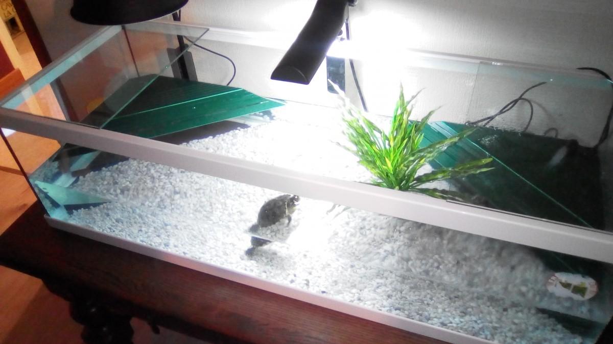 Avis sur aquarium tortum avec filtre blanc for Filtre aquarium tortue