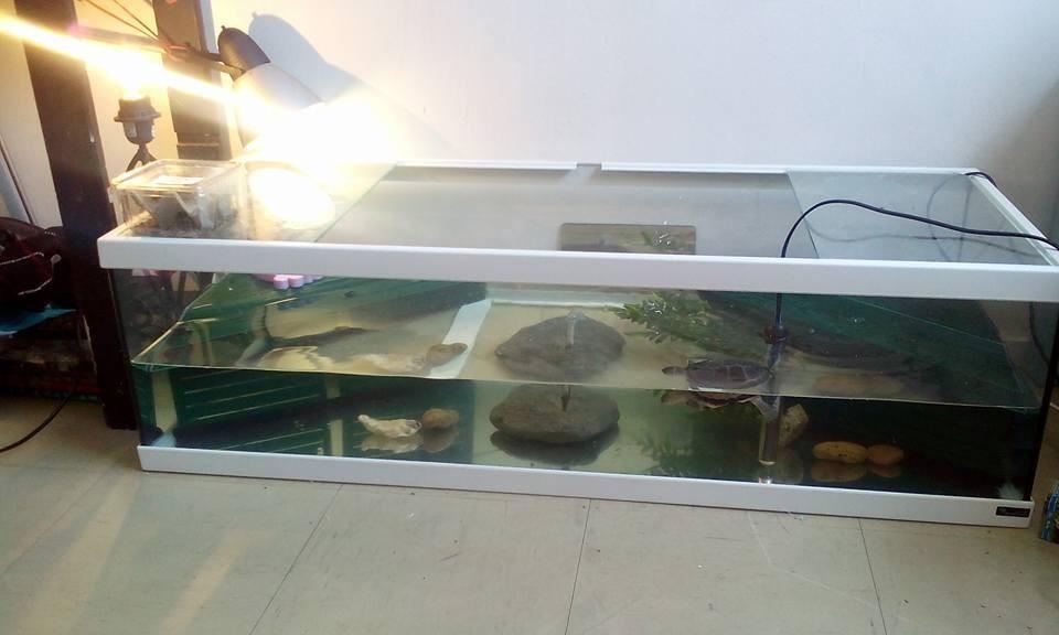 aquarium tortum avec filtre blanc terrarium et meuble. Black Bedroom Furniture Sets. Home Design Ideas