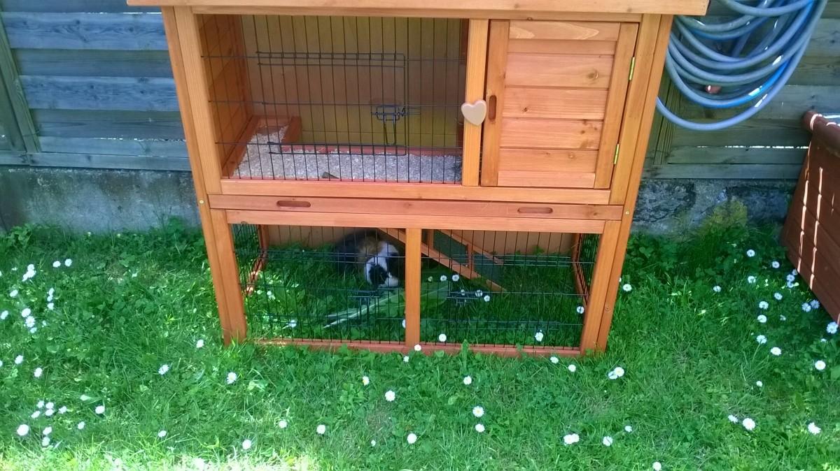 Clapier lapin et rongeurs zolia belino avec cour for Exterieur lapin