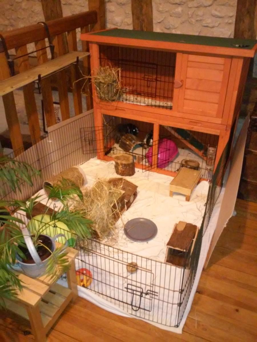 Avis sur clapier lapin et rongeurs zolia belino avec cour for Clapier lapin exterieur