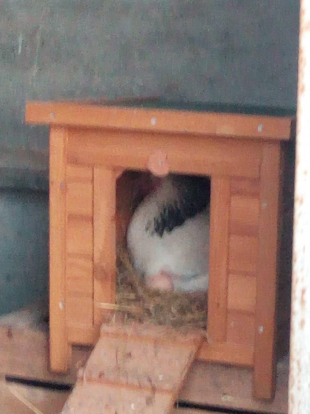 Avis sur abri clapier pour lapins et rongeurs zolia for Abri lapin exterieur